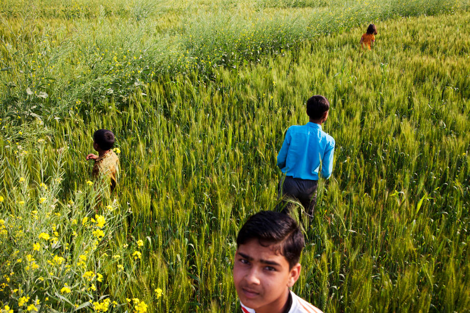 Children in the wheat field, Hamirpur