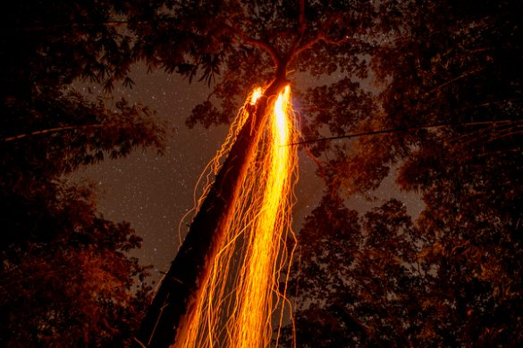 Glowing ember from bintang fall down to the forest ground after it brushed against the hive. The bee following the glowing embers down to the ground. -Photograph by Hasnoor Hussain.
