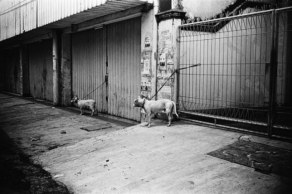 Shortlisted Photograph by Jiang D 蔣世基.