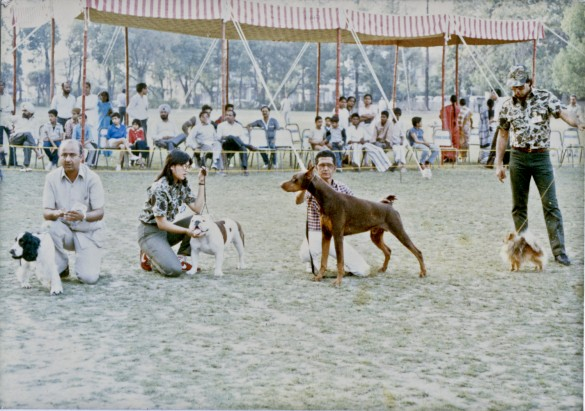 Dog shows in the 1970's and 1980's. Photograph courtesy of Karan Vaid.
