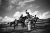 EXCLUSIVE, INDONESIA - February 10, 2013. Some jockey kids practicing race horses on the island of Sumbawa, West Nusa Tenggara, Indonesia. Without any fear, children aged 5-9 race on horseback at up to 80km per hour. In Sumbawa Island, West Nusa Tenggara, a horseback racing tradition involves child jockeys. The talent for horseback racing is passed on from generation to generation. Children learn to let go of their fear, even with the very real risk of falling, becoming maimed, or dying during the race. The local government and parents consider this tradition an important part of their culture, which must be preserved. Even with all the risks and dangers involved, no one cares for the safety of these child jockeys. Not even standard safety horse riding gear is provided. Besides safety, there are other concerns for the welfare of these children. Preparation and training for the horse riding races interferes with their education. Each year there are at least ten horse races. Each racing event takes at least ten days. This adds up, and every year these child jockeys are missing 100 days of school. No one views the situation as exploitation of children. The children are paid a small fee for each race of around Rp 20,000 to 50,000 rupiah (two to five USD). But the real money involved is from the betting at each race, which is not monitored or banned by the authorities. Photograph by Romi Perbawa